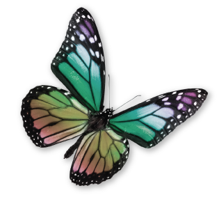 Visiting Nurse Home Care & Hospice of Carroll County and Western Maine - butterly logo mark